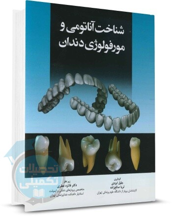 شناخت آناتومی و مورفولوژی دندان اندیشه رفیع